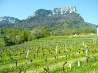 Vin, viticulture