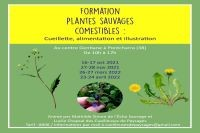 visuel-pour-insta-formation-plantes-com-et-illu2122-1733