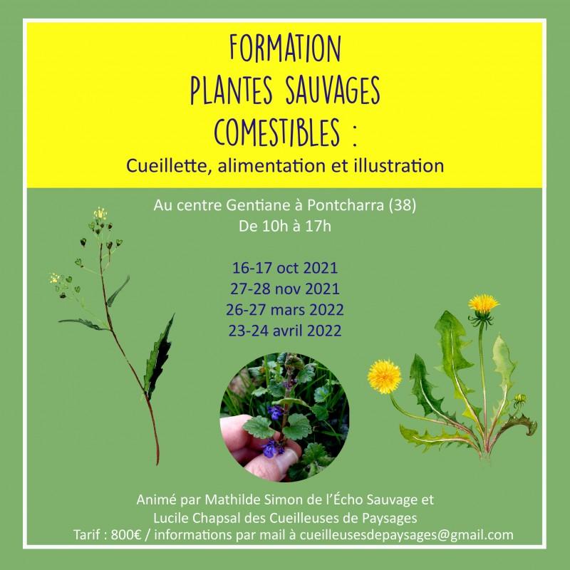 visuel-pour-insta-formation-plantes-com-et-illu-1734